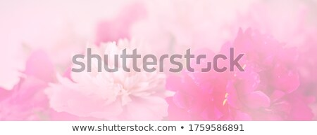 Valentine light and tender floral background Stock photo © Elmiko