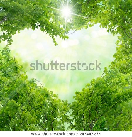 ストックフォト: バレンタイン · フローラル · 緑 · 中心 · 手 · 図面