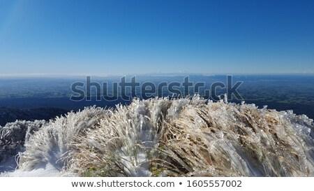 ビジター · センター · ニュージーランド · 森林 · 山 · 火山 - ストックフォト © emiddelkoop