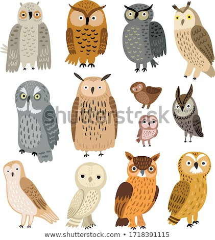 vector · owls · set · colorat · inimă · corp - imagine de stoc © beaubelle