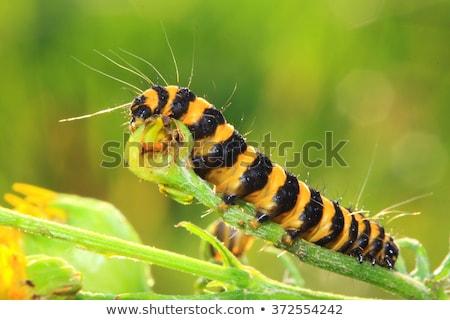 rups · plant · oranje · groene · zwarte - stockfoto © suerob