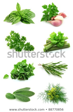 Collage of green and juice spice Stock photo © Masha