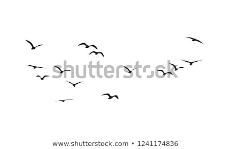 oiseau · silhouette · noir · colombe · canard · perroquet - photo stock © goce