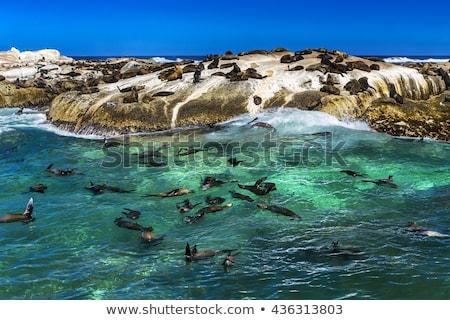 South Africa tabel berg park Cape Town hemel Stockfoto © intsys