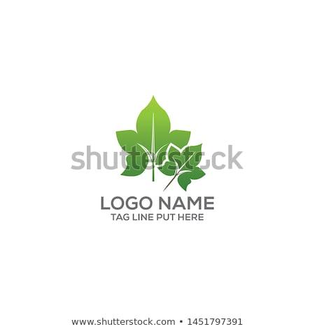 lierre · vecteur · branche · blanc · noir · couleurs · feuille - photo stock © zzve