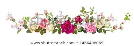 Stock photo: panoramic roses
