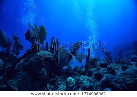 Vízalatti tájkép illusztráció jelenet víz élet Stock fotó © Dazdraperma