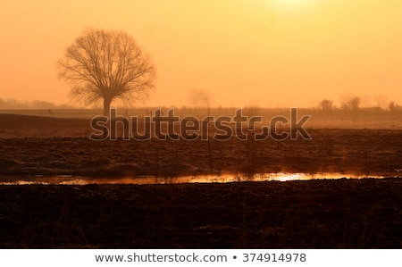 Stock photo: The field of early spring morning