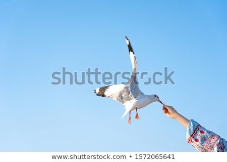 Actif mer mouettes bleu océan oiseaux Photo stock © lunamarina