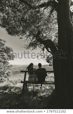 Stock photo: Bench under a tree