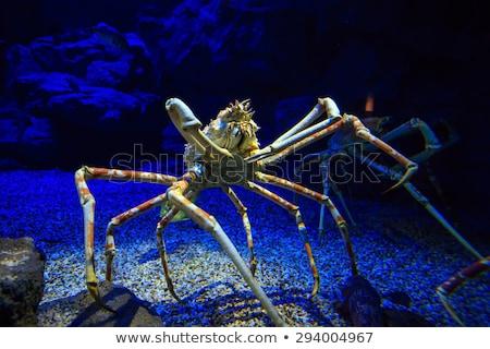 granchio · spider · seduta · fiore · rosso · bianco - foto d'archivio © prill