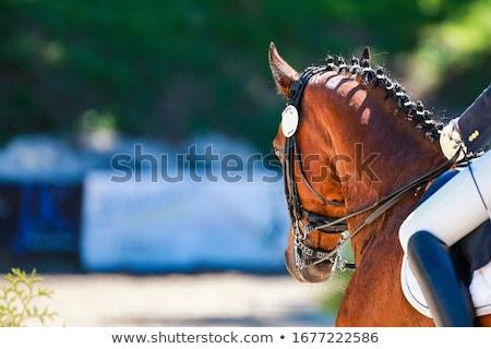 Caballos cuatro dentro caballo blanco marrón Foto stock © exile7