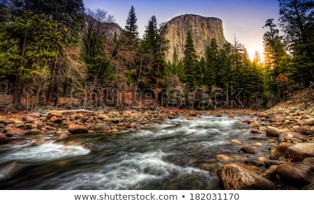 Stock photo: River in the forest - HDR
