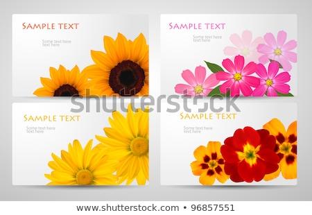 Colorful Gerbers Flower Banner Stock photo © adamson