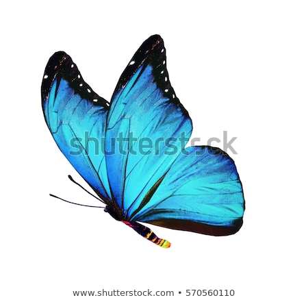 Stockfoto: Green Pink And Blue Butterflies Isolated On White