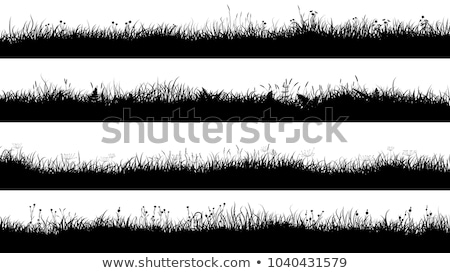 Grass Silhouette Stock photo © derocz