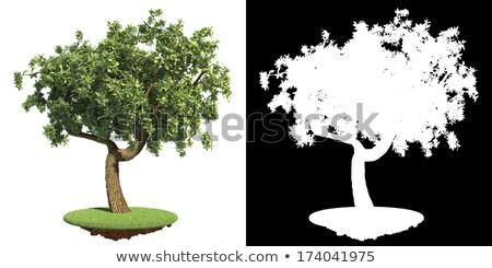 Park's Green Tree with Detail Raster Mask. Stock photo © tashatuvango