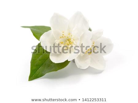 fleur · fleur · printemps · nature · beauté - photo stock © serpla
