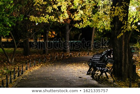row of empty benches in nature stock photo © aetb