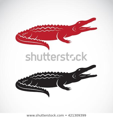 Dois americano crocodilo praia abrir boca Foto stock © OleksandrO