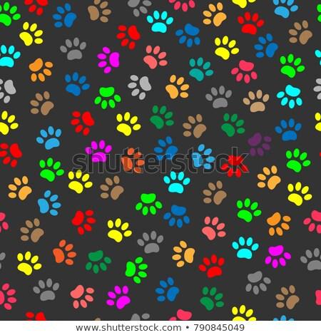 aranyos · kutya · macska · mancs · nyomtatott · vektor - stock fotó © aliaksandra