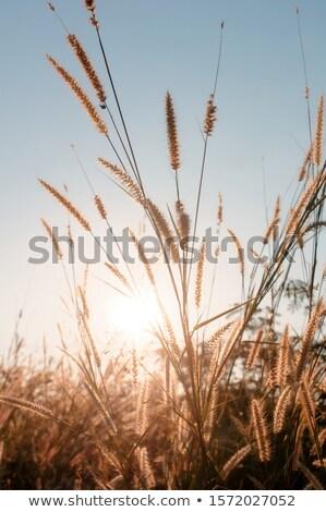 太陽 · 湖 · 日没 · 水 · 光 · 緑 - ストックフォト © Bellastera