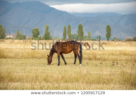 bird sitting on konik horse stock photo © michaklootwijk