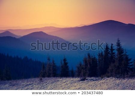 Vintage autunno albero tramonto raggi di sole montagna Foto d'archivio © Taiga