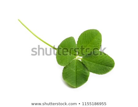 Leaf and flower of clover isolated on white background Stock photo © tetkoren