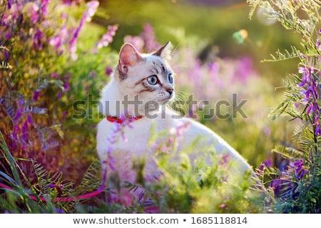 кошки цветок серый полосатый пурпурный природы Сток-фото © tony4urban