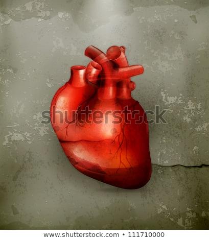Anatomie menselijke hart retro-stijl pop art geneeskunde Stockfoto © studiostoks