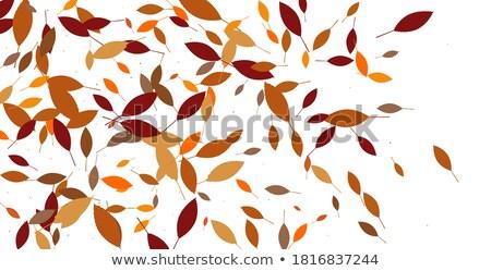 葉 · 秋 · 森林 · eps · 10 · ベクトル - ストックフォト © beholdereye