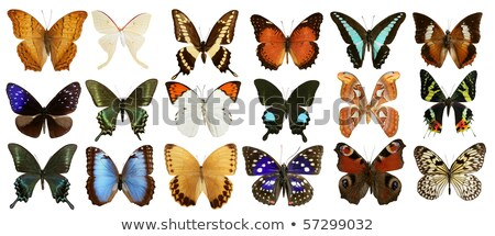 Multiple colorful butterflies background on black  Stock photo © shawlinmohd