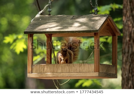 Sincap sonbahar örnek doğa komik hayvan Stok fotoğraf © adrenalina