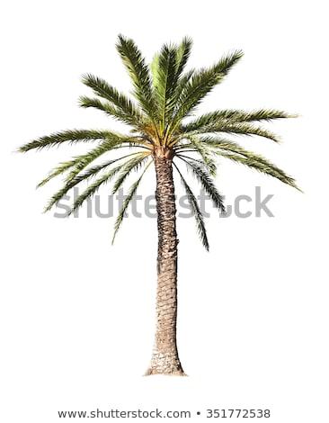 Palme deserto sereno sabbia caldo Foto d'archivio © adrian_n