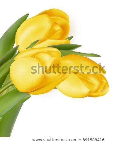Yellow flowers isolated on white. EPS 10  Stock photo © beholdereye