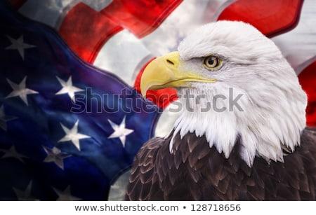 profile eagle grunge stock photo © fotoyou