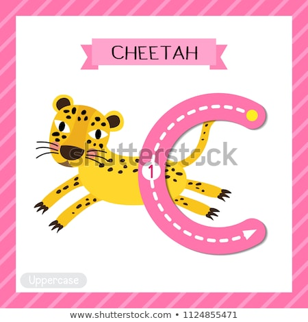 Stockfoto: Letter · c · cheetah · illustratie · kinderen · kind · achtergrond