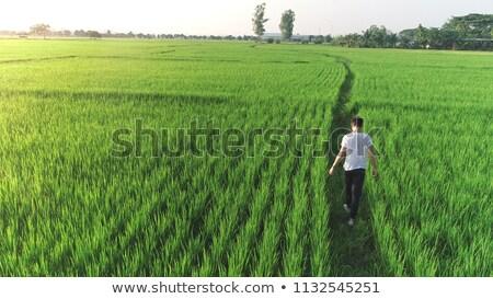 Landwirt Fuß grünen Weizenfeld windig Frühling Stock foto © stevanovicigor