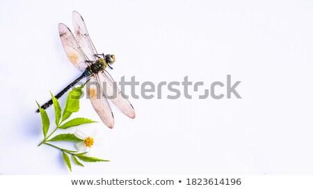 зеленый Dragonfly белый иллюстрация улыбка искусства Сток-фото © bluering