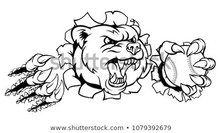 bear holding baseball ball breaking background stock photo © krisdog