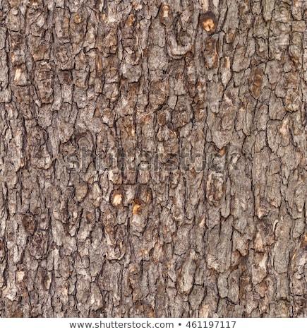 Кора бесшовный текстуры коричневый шаблон Сток-фото © tashatuvango