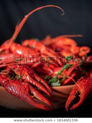 ボウル 魚 海 グループ 赤 ストックフォト © Alex9500