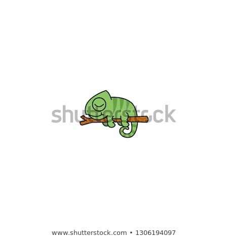 Cartoon kameleon liefde illustratie baby groene Stockfoto © cthoman