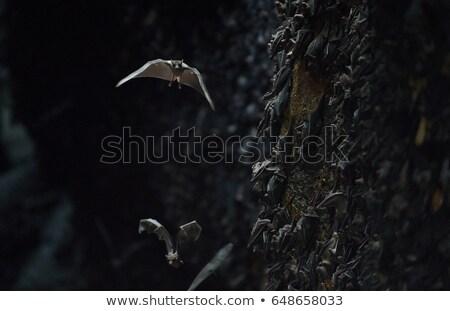 колония пещере Гоа Бали Индонезия каменные Сток-фото © boggy