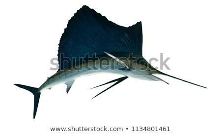 Indo-Pacific fishes Stock photo © sahua