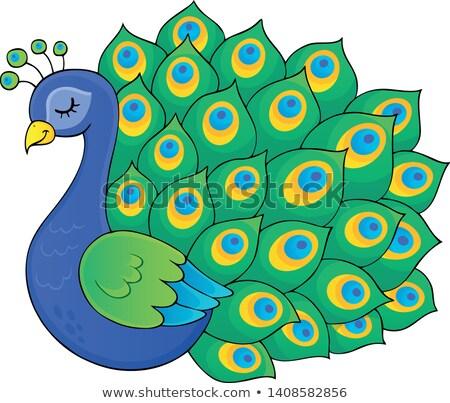 peacock theme image 3 stock photo © clairev