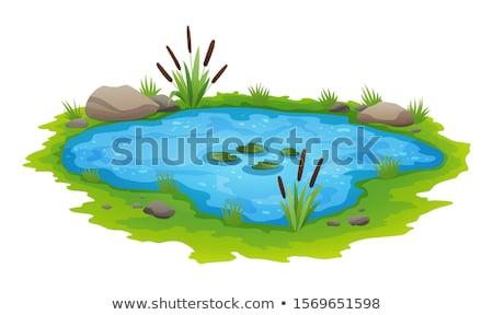 Isolato stagno illustrazione mappa natura design Foto d'archivio © bluering