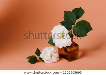 Rosas perfume garrafa branco topo ver Foto stock © serdechny
