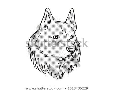 Finnish Spitz  Dog Breed Cartoon Retro Drawing Stock photo © patrimonio